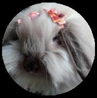 Fuzzy-Lop-redondo